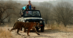 Ranthambore Attraction